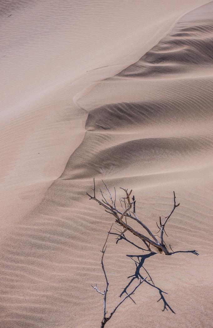 Sanddunedetails